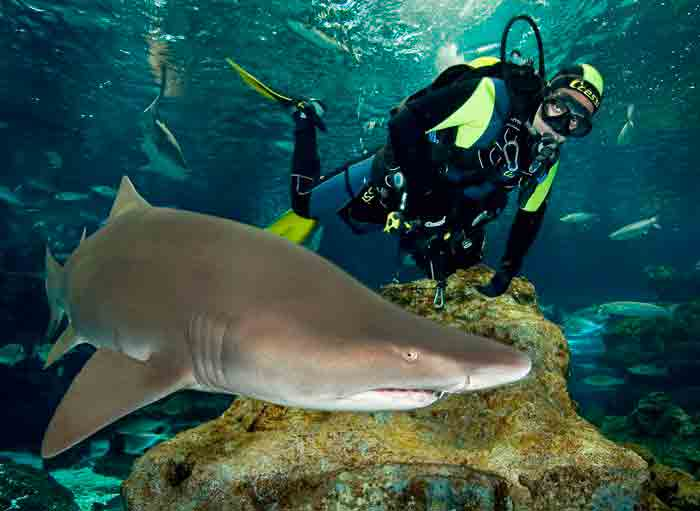 Experiences with sharks