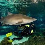 inmersion-con-tiburones-aquarium-barcelona-2