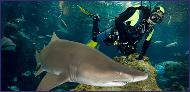 ppal-inmersion-con-tiburones