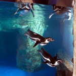 la-vida-al-fred-pinguinos-aquarium-barcelona