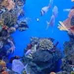 tropical-aquarium-barcelona-3