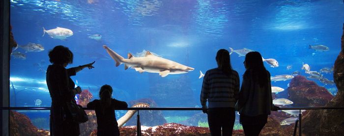 premium pass L'Aquàrium barcelona vip shark tiburon diving exclusiva