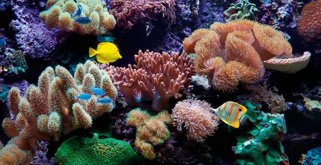 Acuario doméstico de agua marina