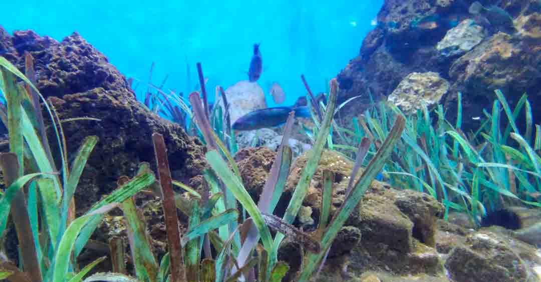 Plantas marinas y algas