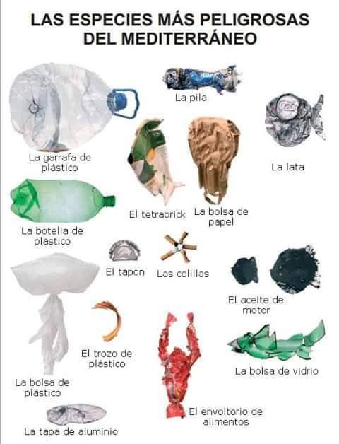 Botellas de plástico en el mar, la especie más peligrosa del mar.